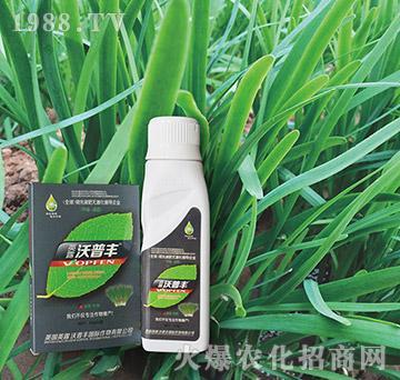 韭菜专用氨基松脂菌露母