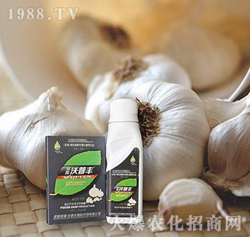 大蒜专用氨基松脂菌露母