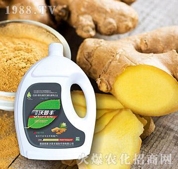 大姜专用氨基松脂菌露母
