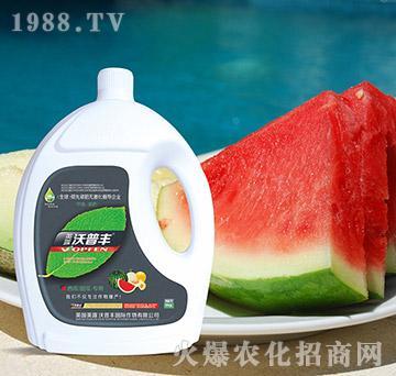 西瓜甜瓜专用冲施肥(桶