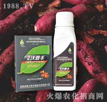 红薯专用氨基松脂菌露母