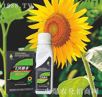 向日葵专用氨基松脂菌露