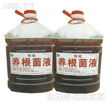 养根菌液-丰绿生物