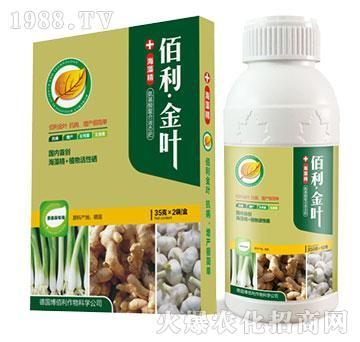 葱姜蒜专用-佰利・金叶
