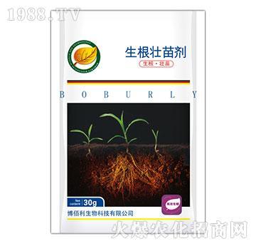 生根壮苗剂-博佰利