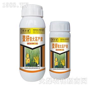 麦籽膨大高产素-郭师傅