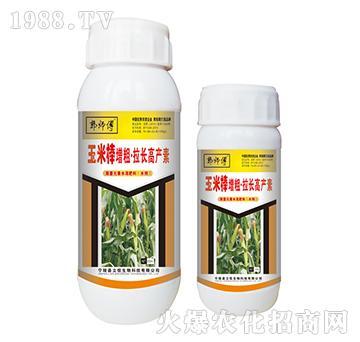 玉米棒增粗拉长高产素-郭师傅-立信生物