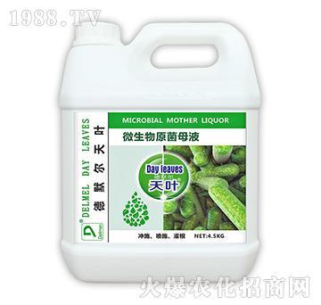 微生物原菌母液4.5k