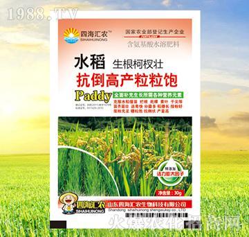水稻抗倒高产粒粒饱-四