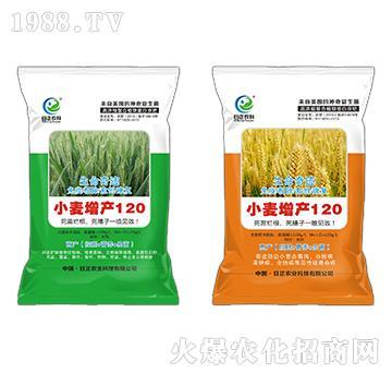 小麦增产120-生命奇