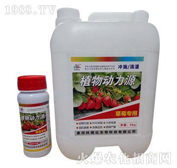 草莓专用-植物动力源-