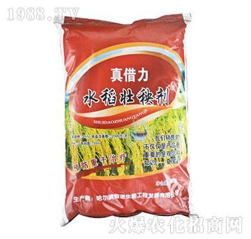 水稻壮秧剂-真借力-恒诺生物