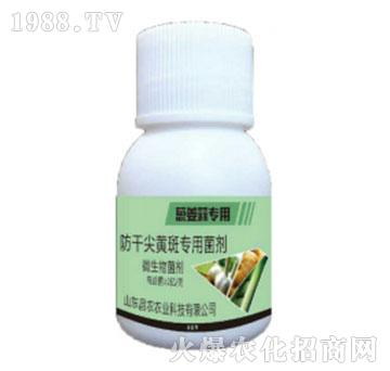 葱姜蒜专用防干尖黄斑专用菌剂-昌农