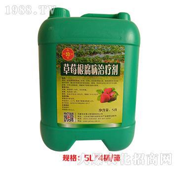 草莓根腐病治疗剂-农博士