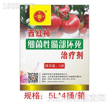 西红柿细菌性髓部坏死治
