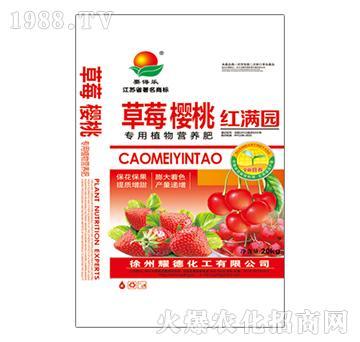 草莓樱桃红满园-耀德化