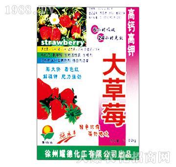 高钙高钾大草莓-耀德化