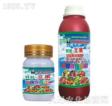 钼锌钾钙镁硼-叶旺・立