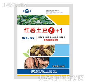 红薯土豆1+1-翰森