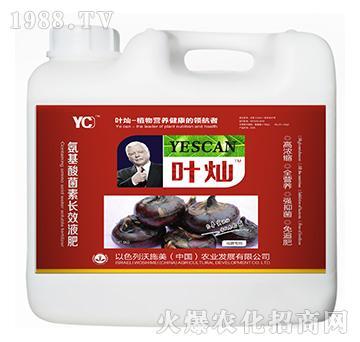马蹄专用氨基酸菌素长效液肥-叶灿-沃施美