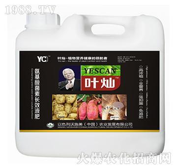 块根茎专用氨基酸菌素长