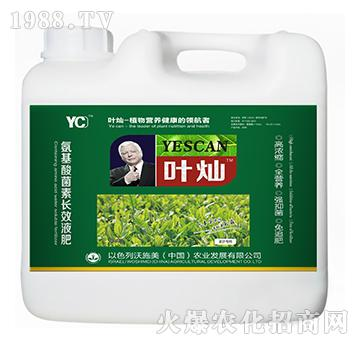 茶叶专用氨基酸菌素长效