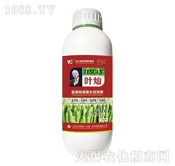 芦笋专用氨基酸菌素长效液肥-叶灿-沃施美