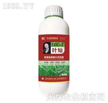 韭菜专用氨基酸菌素长效液肥-叶灿-沃施美