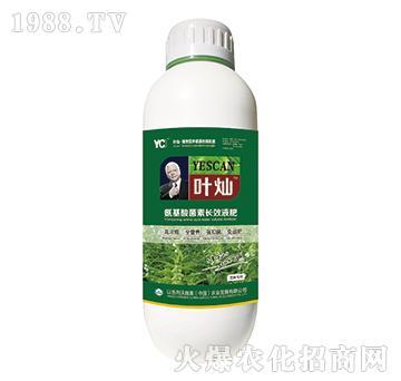 芝麻专用氨基酸菌素长效液肥-叶灿-沃施美