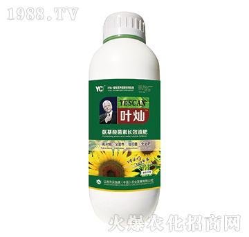葵花專用氨基酸菌素長效液肥-葉燦-沃施美