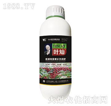 花椒專用氨基酸菌素長效液肥-葉燦-沃施美