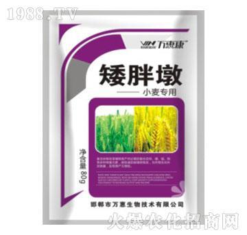 小麦专用矮胖墩-万惠康