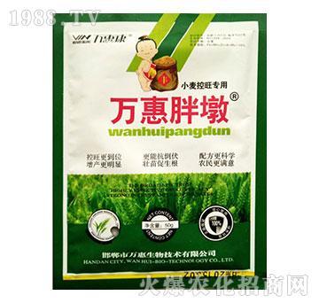小麦控旺专用-万惠胖墩-万惠康