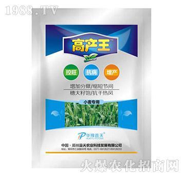 小麦控旺专用-小麦高产王-普天