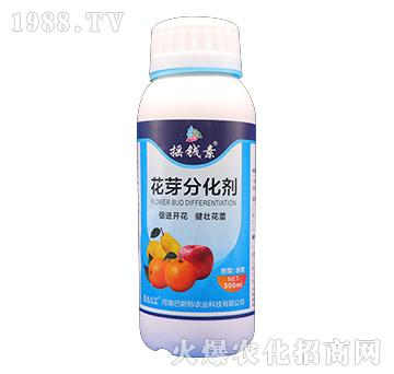 花芽分化剂-摇钱素-巴