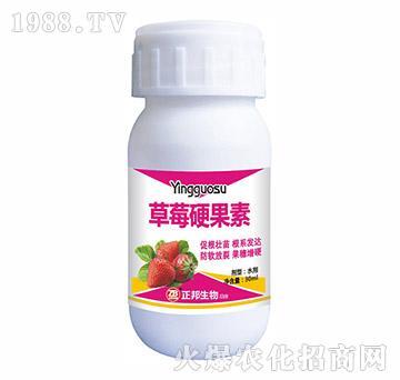 草莓硬果素-宝典实业