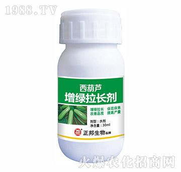 西葫芦增绿拉长剂-宝典