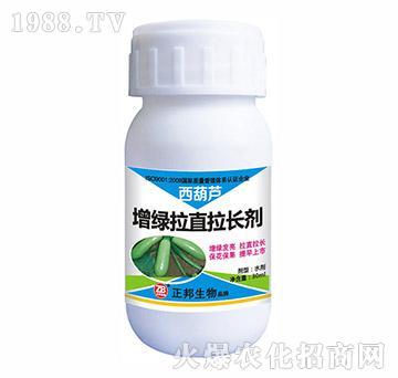 西葫芦增绿拉直拉长剂-