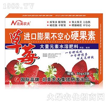 草莓进口膨果不空心特效