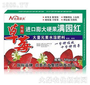 草莓专用进口膨大硬果-