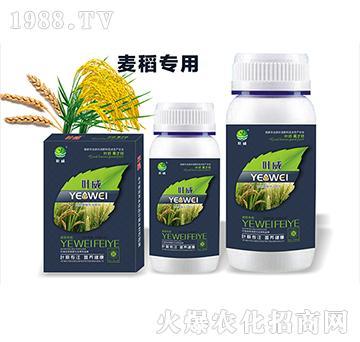 麥稻專用含氨基酸水溶肥料-葉威