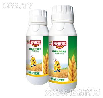高防小麦赤霉病-麦傻丰-大泽农业