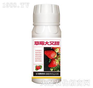 草莓大又甜-派森农化