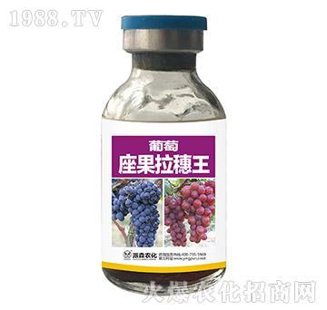 葡萄座果拉穗王-派森农化