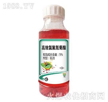 5%高效氯氰菊酯-杀虫