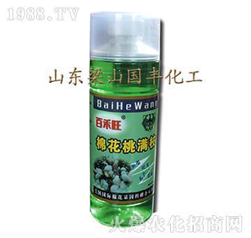 棉花桃满枝(500ml