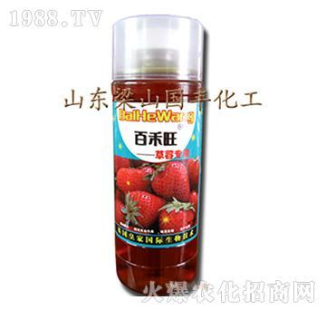 草莓专用叶面肥-梁山国