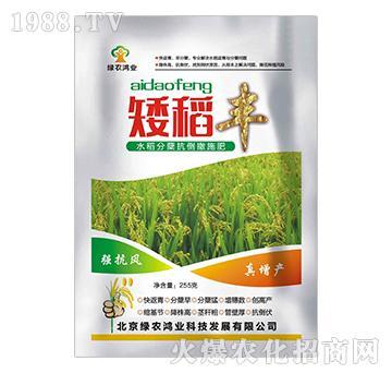 水稻分蘖抗倒撒施肥-矮稻丰-绿农鸿业