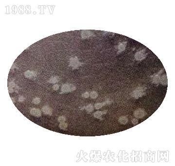 地衣芽孢杆菌-中向启明