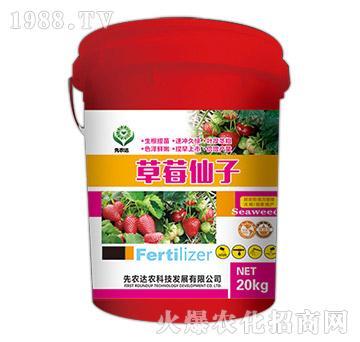 冲施肥-草莓仙子-先农达